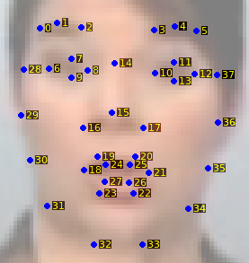 Face shape annotation example